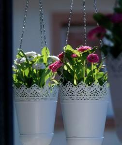 floral-967119_1920