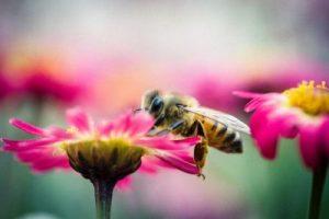 Insektenschutz von unterschiedlichen Herstellern